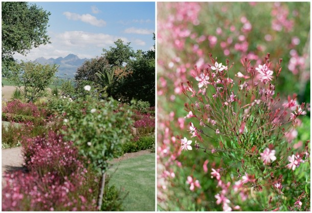 Contax 645 Fuji 400H Cape Town Photographer  (28)